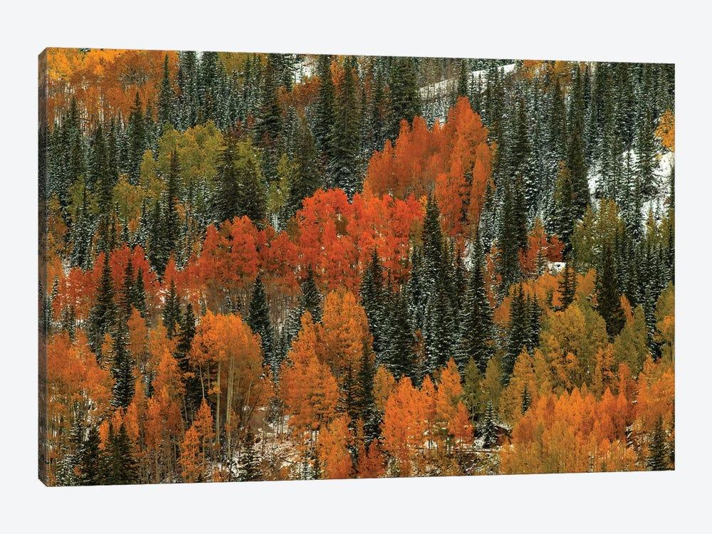 Orange Fire by Bill Sherrell 1-piece Canvas Print