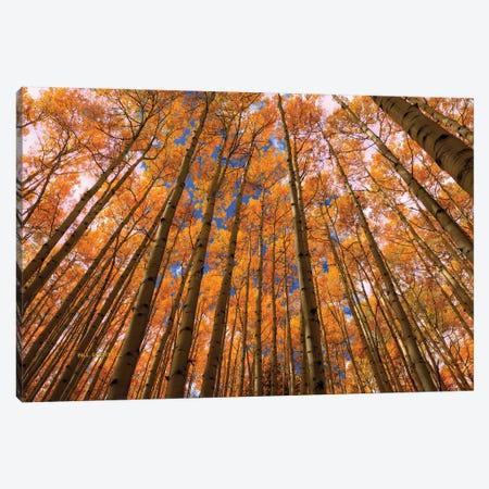 Orange Grove Canvas Print #SHL154} by Bill Sherrell Canvas Wall Art