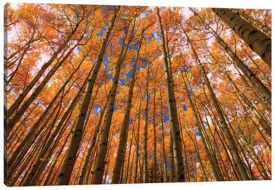 Orange Grove Canvas Art Print