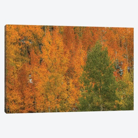 Orange Wildfire Canvas Print #SHL156} by Bill Sherrell Canvas Artwork