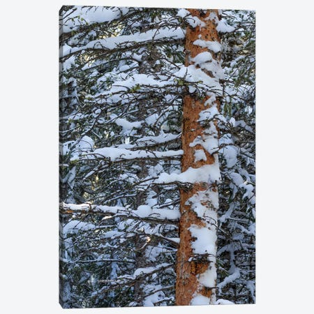Out On A Limb Canvas Print #SHL157} by Bill Sherrell Canvas Art
