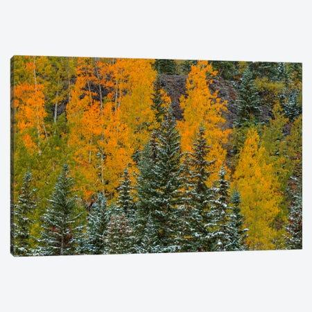 Pastel Splash Canvas Print #SHL161} by Bill Sherrell Canvas Art