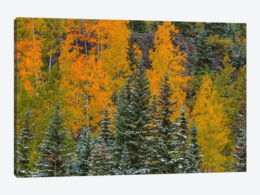 Pastel Splash by Bill Sherrell 1-piece Canvas Artwork