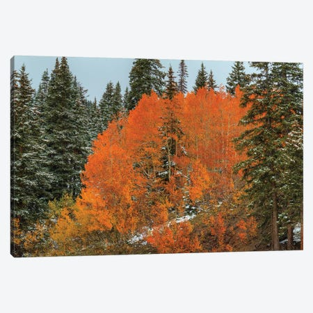 Red Orange Magic Canvas Print #SHL165} by Bill Sherrell Canvas Art Print
