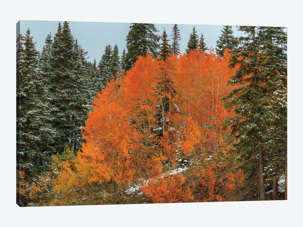 Red Orange Magic by Bill Sherrell 1-piece Canvas Artwork