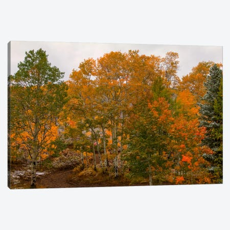 A Splash Of Color Canvas Print #SHL16} by Bill Sherrell Canvas Wall Art