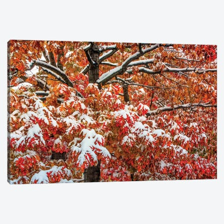 Seasons Of Change Canvas Print #SHL177} by Bill Sherrell Canvas Artwork