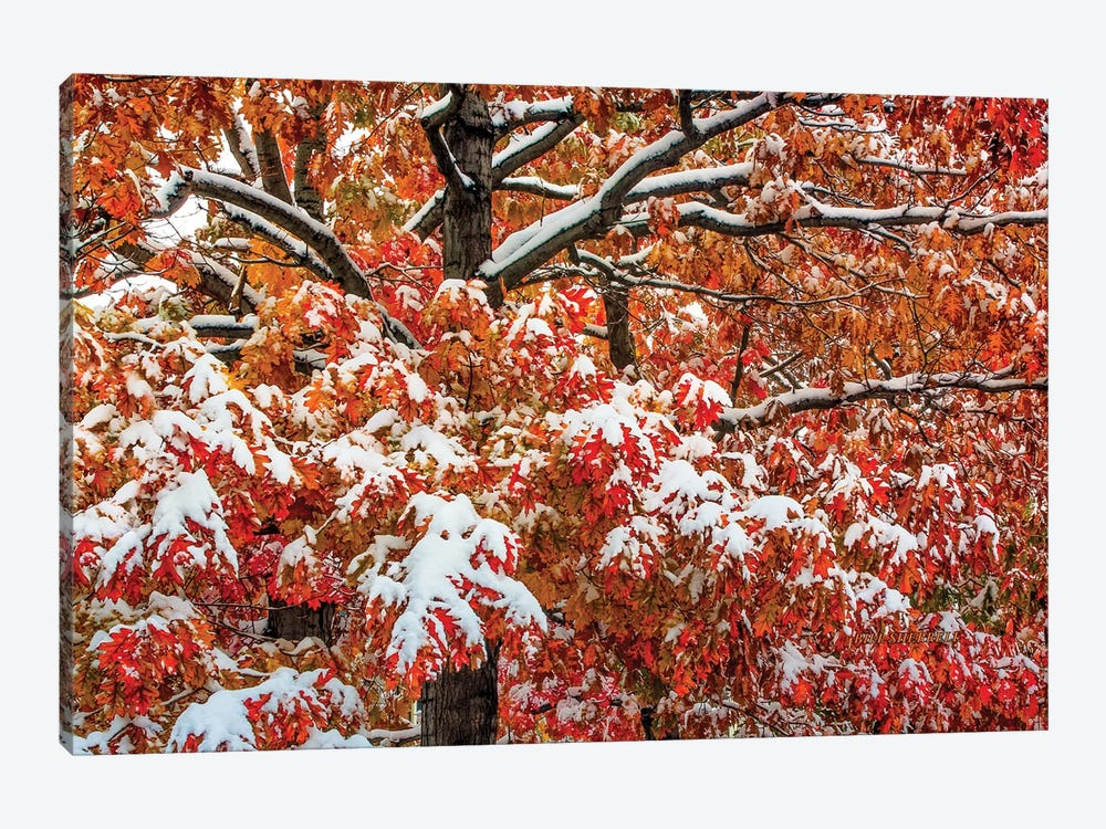 Seasons Of Change by Bill Sherrell 1-piece Canvas Print