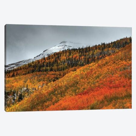 Shades Of Autumn Canvas Print #SHL178} by Bill Sherrell Canvas Art Print