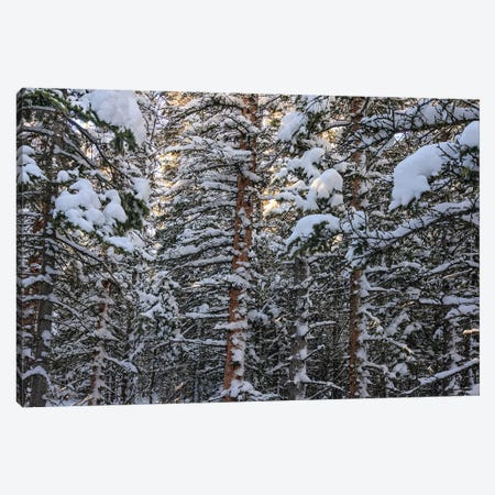Snowbound Canvas Print #SHL182} by Bill Sherrell Canvas Wall Art
