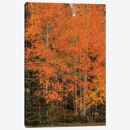 The Red-Orange Experience Canvas Print #SHL213} by Bill Sherrell Canvas Art