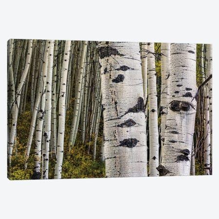 Trunks Canvas Print #SHL222} by Bill Sherrell Canvas Print