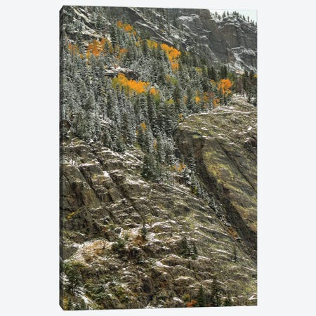 White Lace And Autumn Slivers Canvas Print #SHL234} by Bill Sherrell Canvas Print