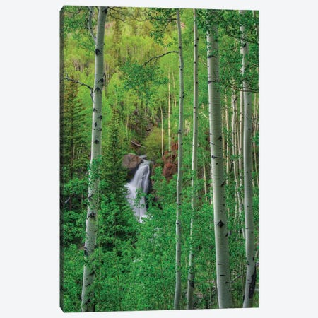 Wilderness Falls Canvas Print #SHL236} by Bill Sherrell Canvas Print