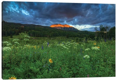Wildflowers And Mountain Majesty Canvas Art Print