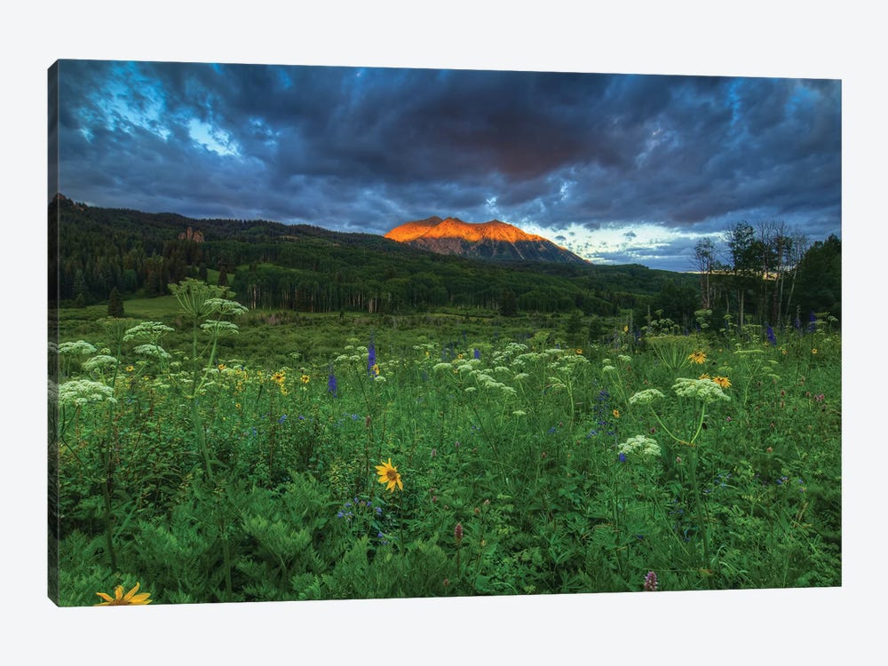 Wildflowers And Mountain Majesty by Bill Sherrell 1-piece Canvas Art Print
