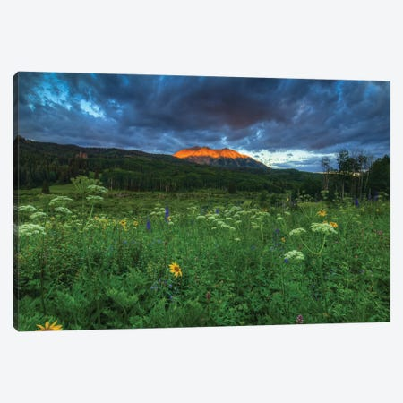Wildflowers And Mountain Majesty Canvas Print #SHL237} by Bill Sherrell Canvas Print