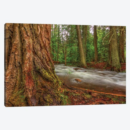 Woodsy Canvas Print #SHL240} by Bill Sherrell Canvas Print