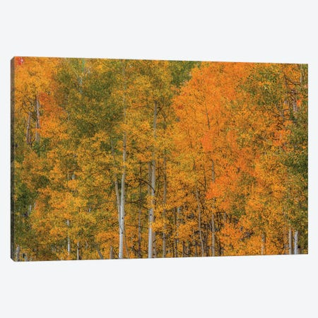 Color Transformation Canvas Print #SHL245} by Bill Sherrell Canvas Wall Art