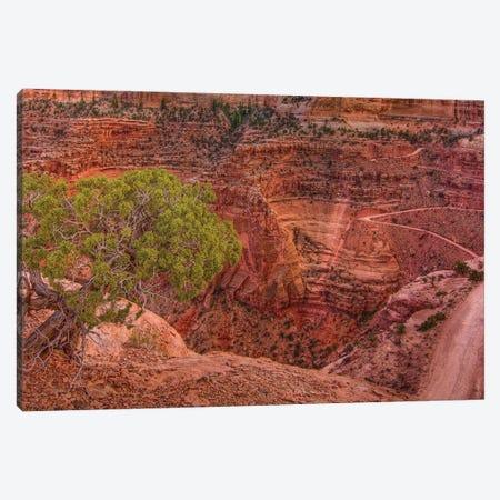 Desert Contrast Canvas Print #SHL246} by Bill Sherrell Canvas Art