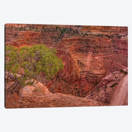 Desert Contrast Canvas Print #SHL246} by Bill Sherrell Canvas Art