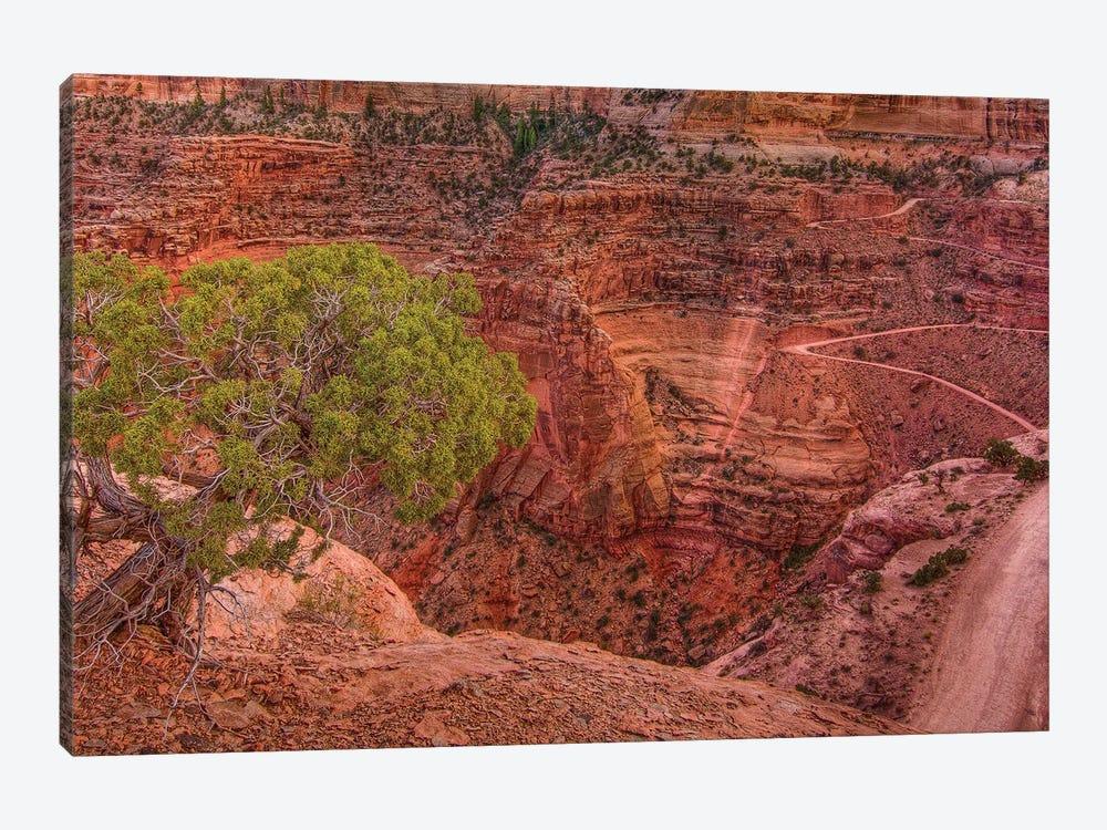 Desert Contrast by Bill Sherrell 1-piece Art Print