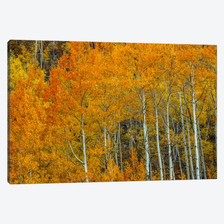 Orange Delight Canvas Print #SHL251} by Bill Sherrell Canvas Artwork
