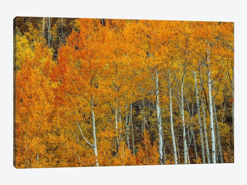 Orange Delight by Bill Sherrell 1-piece Canvas Print