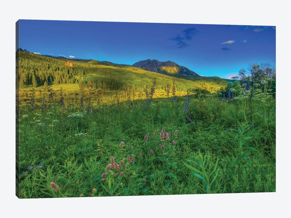 Wildflowers And Windows Of Light by Bill Sherrell 1-piece Canvas Artwork