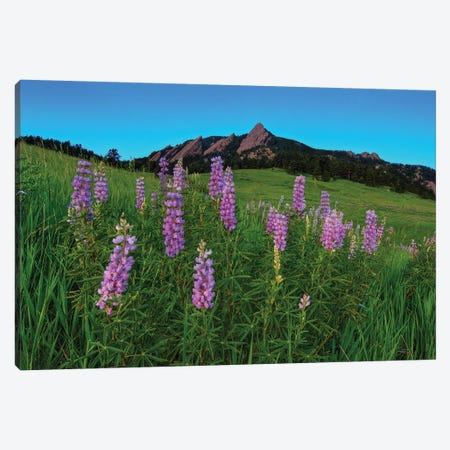 Spring Wildflowers At The Flatirons Canvas Print #SHL271} by Bill Sherrell Canvas Artwork