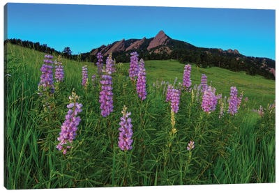 Spring Wildflowers At The Flatirons Canvas Art Print