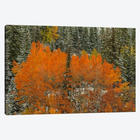 Aspen Flames Canvas Print #SHL27} by Bill Sherrell Canvas Art Print