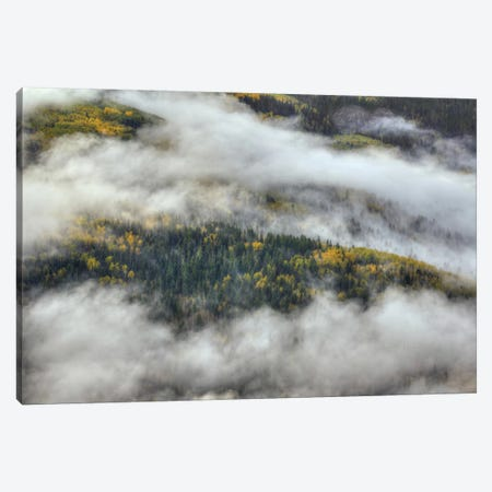 Aspen Forest In The Clouds Canvas Print #SHL28} by Bill Sherrell Canvas Wall Art
