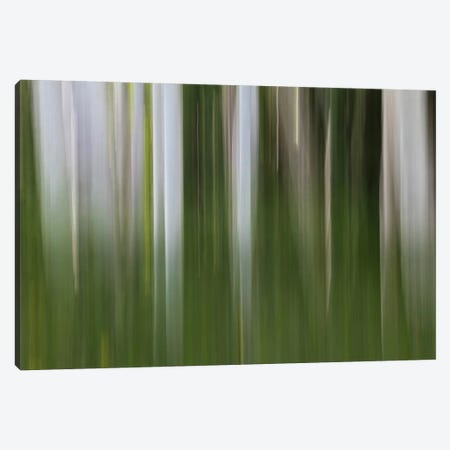 Aspen Forest In The Spring I Canvas Print #SHL29} by Bill Sherrell Canvas Artwork
