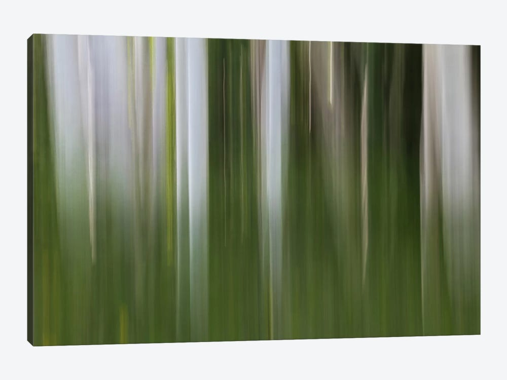 Aspen Forest In The Spring I by Bill Sherrell 1-piece Canvas Art