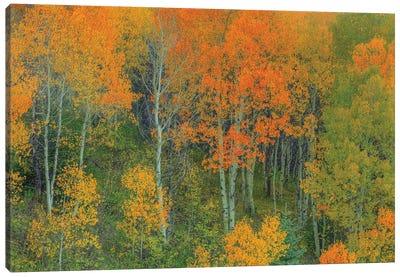 Abounding Color Canvas Art Print