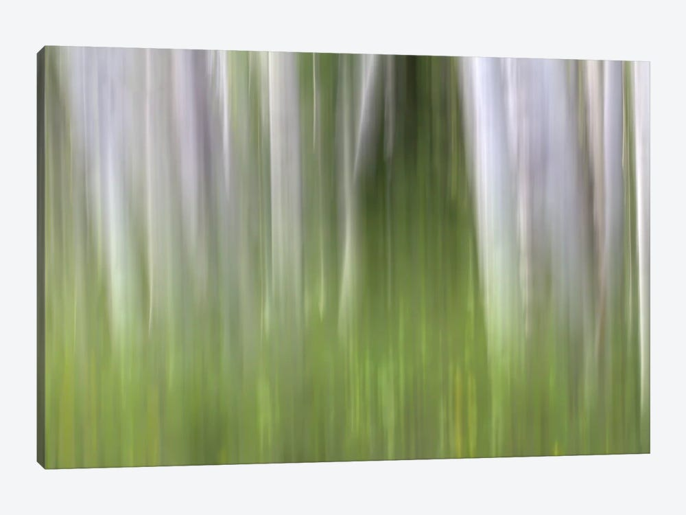 Aspen Forest In The Spring II by Bill Sherrell 1-piece Canvas Wall Art