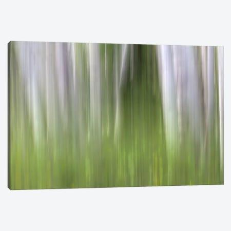 Aspen Forest In The Spring II Canvas Print #SHL30} by Bill Sherrell Art Print