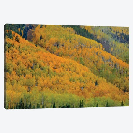 Autumn Metamorphosis Canvas Print #SHL310} by Bill Sherrell Canvas Art Print