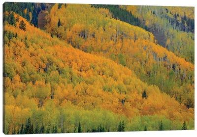 Autumn Metamorphosis Canvas Art Print