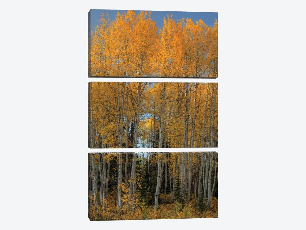 Aspen Autumn Flames by Bill Sherrell 3-piece Canvas Artwork