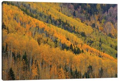 Autumn Rows Canvas Art Print