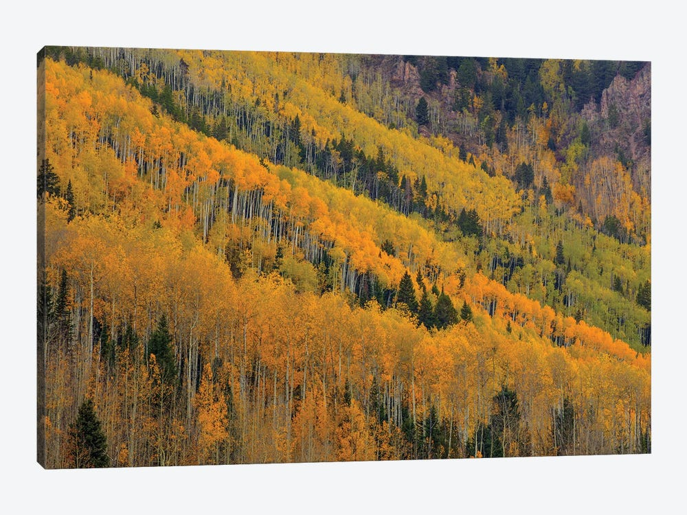 Autumn Rows by Bill Sherrell 1-piece Canvas Artwork