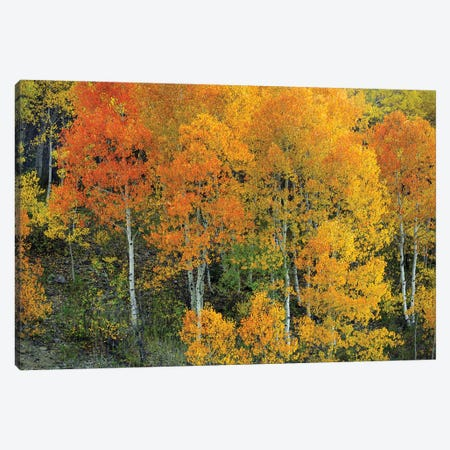 Autumn Serenity Canvas Print #SHL314} by Bill Sherrell Canvas Artwork