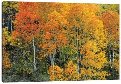 Autumn Serenity Canvas Art Print