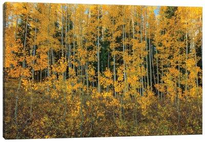 Bursting Into Autumn Canvas Art Print