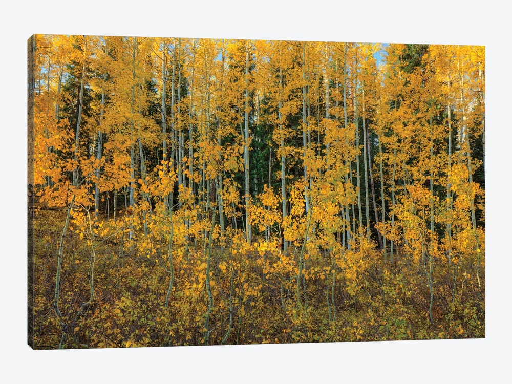 Bursting Into Autumn by Bill Sherrell 1-piece Canvas Wall Art