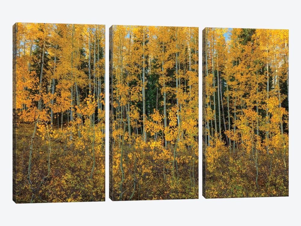 Bursting Into Autumn by Bill Sherrell 3-piece Canvas Artwork