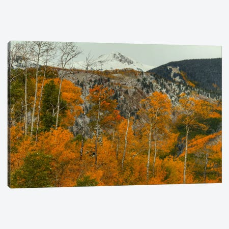Aspen Outlines Canvas Print #SHL31} by Bill Sherrell Art Print