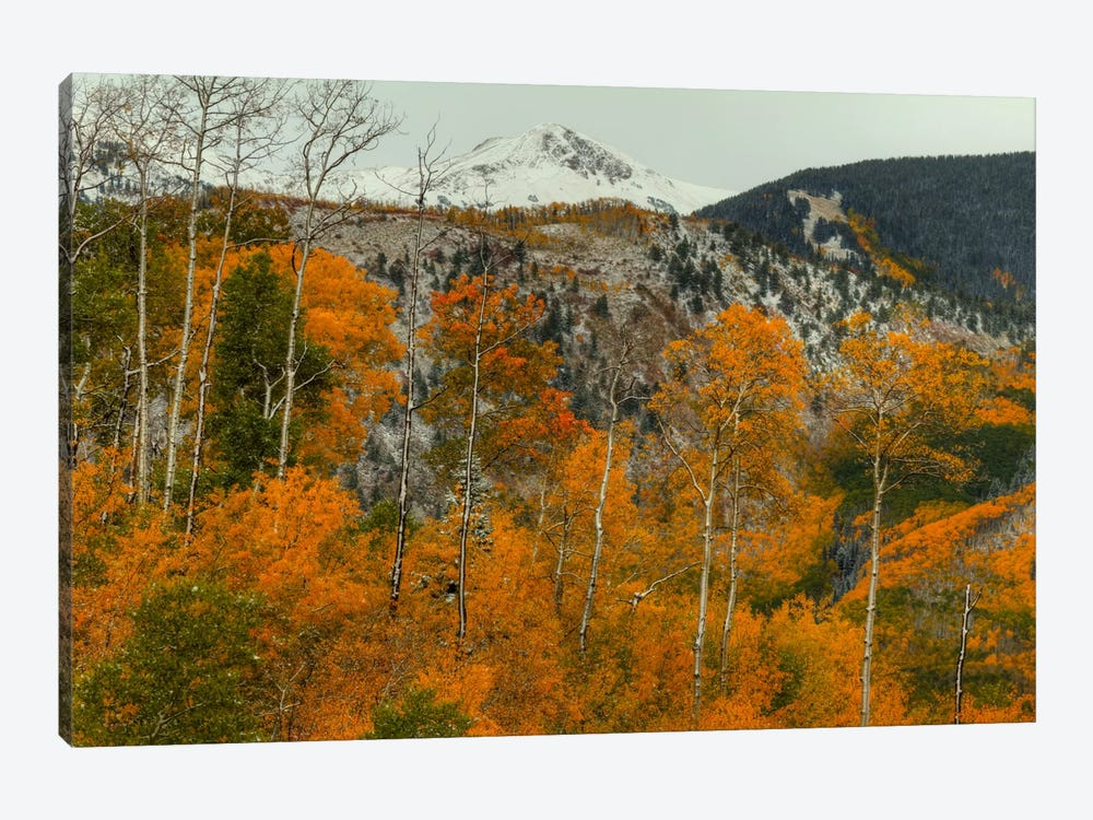 Aspen Outlines by Bill Sherrell 1-piece Art Print